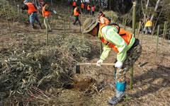 日本電信電話株式会社 様 海岸林再生プロジェクト
